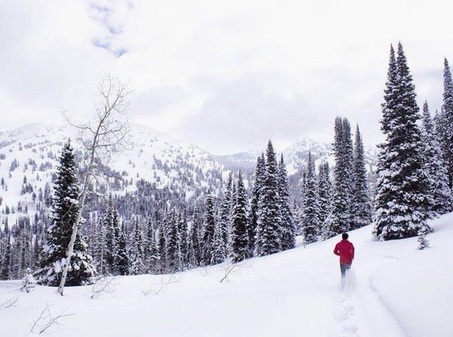 SALOMON Deutschland : Laufschuhe, trail running, wandern