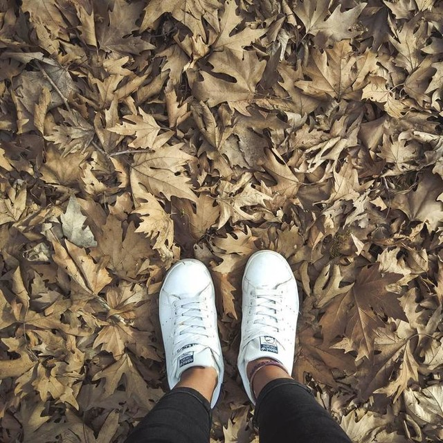 🍁🍂 #dryleaves #leaves #nature #naturelovers #outdoor #outside #natureperfection #forest #leaf #planetreeleaf #photooftheday #picoftheday #nofilter #autumn #shoes #stansmith